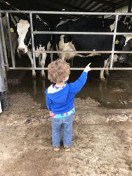 boy looking at cows on farm